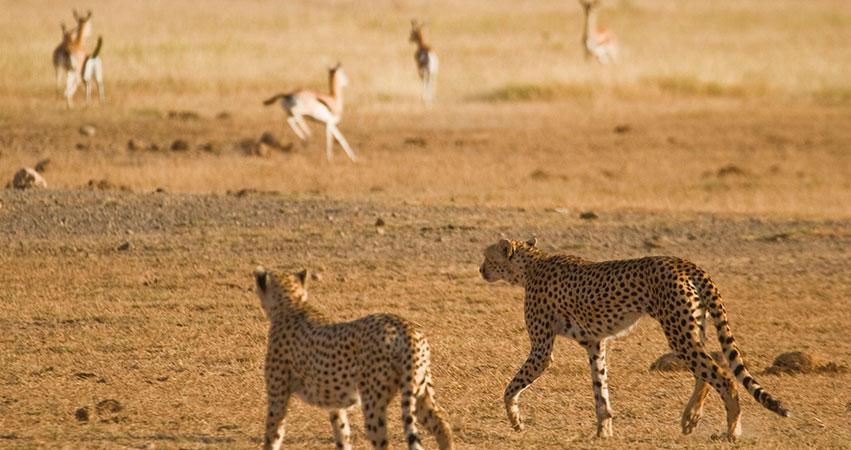 11 Days Amboseli / Masai Mara / Mombasa