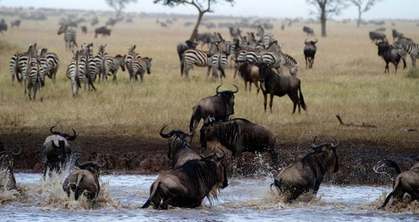 12 Days Masai Mara / Amboseli / Mombasa