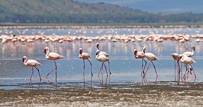 14 Days Samburu / Aberdares / Lake Nakuru / Masai Mara / Mombasa