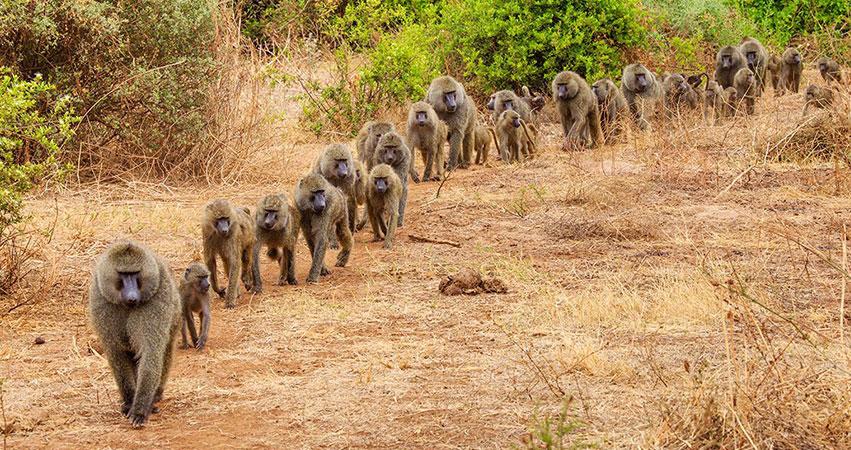 3 Days Lake Manyara National Park / Ngorongoro safari