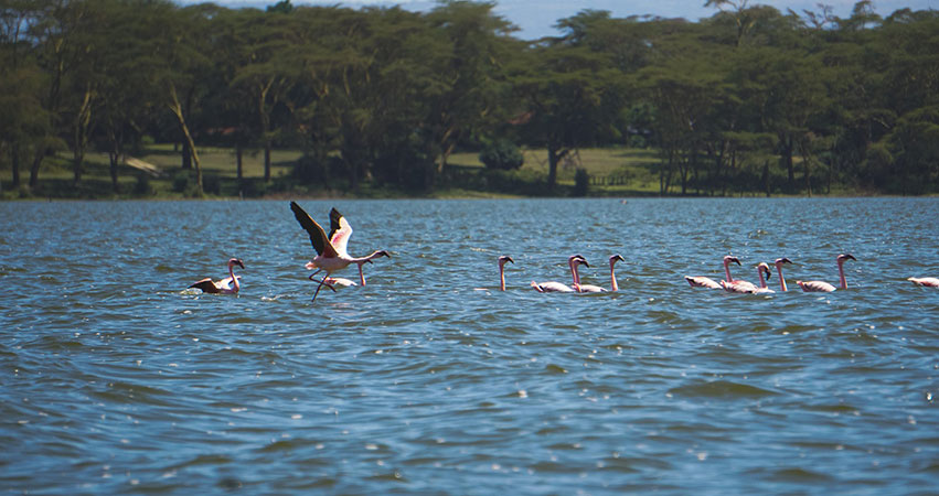 4 Days Lake Naivasha / Masai Mara Safari