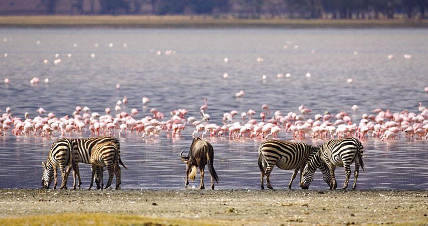 4 Days Masai Mara / Lake Nakuru National Park Safari