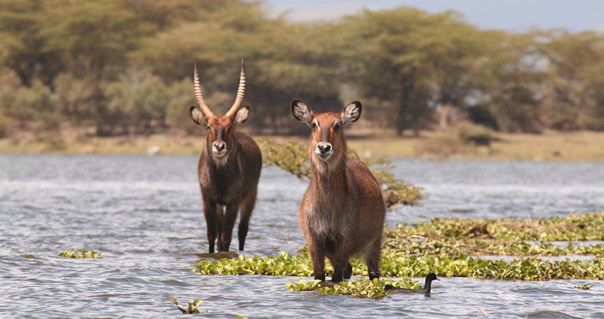 5 Days Lake Nakuru / Lake Naivasha / Masai Mara Safari