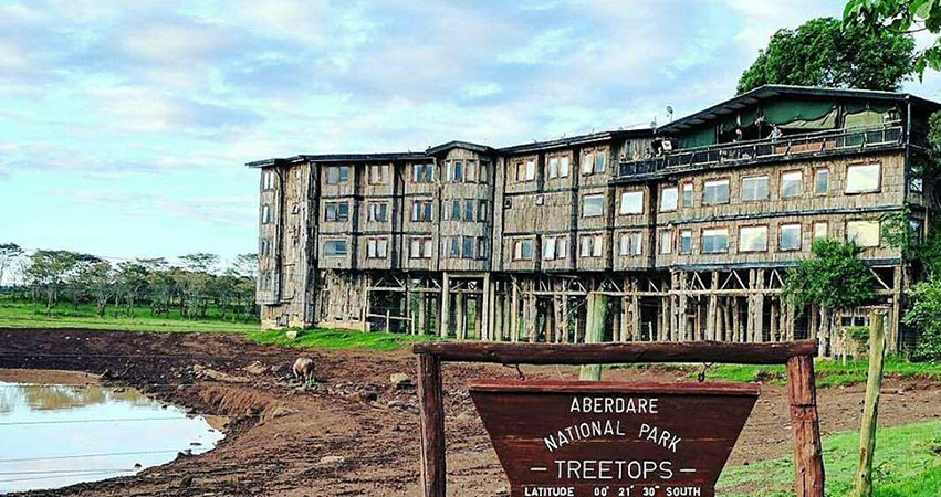 5 Days Treetop lodge in Aberdare / Lake Nakuru / Masai Mara Safari