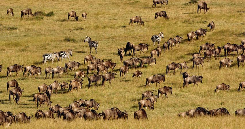 6 Days Masai Mara / Lake Baringo via Lake Bogoria
