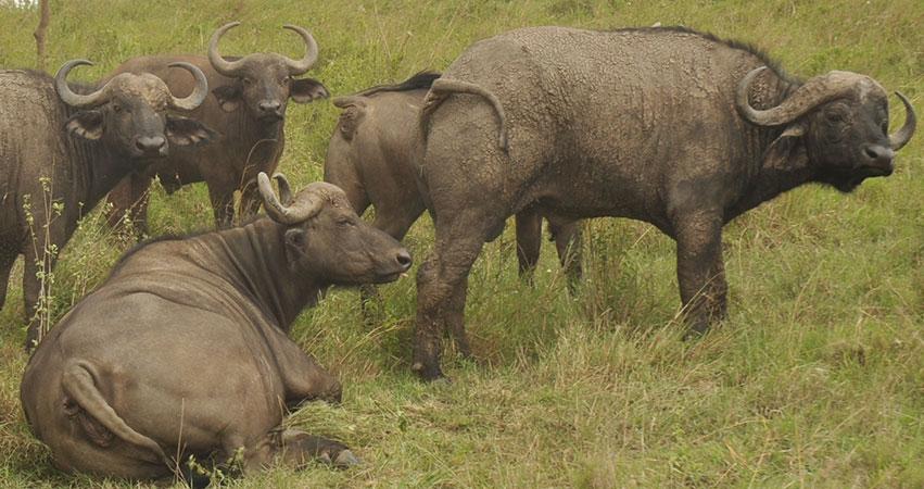 7 Days Samburu Game Reserve / Mount Kenya / Lake Nakuru / Masai mara Safari