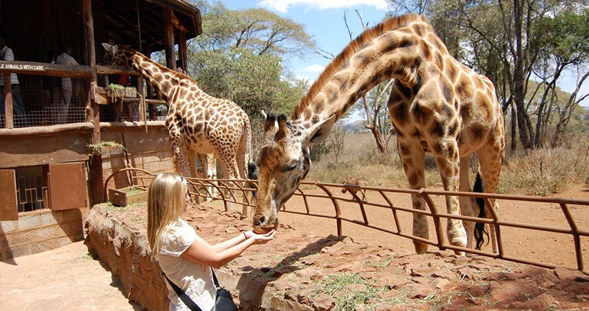 Giraffe Centre Day Tour