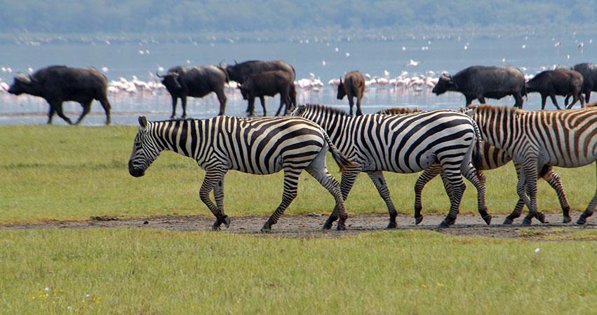 Lake Nakuru Day Trip